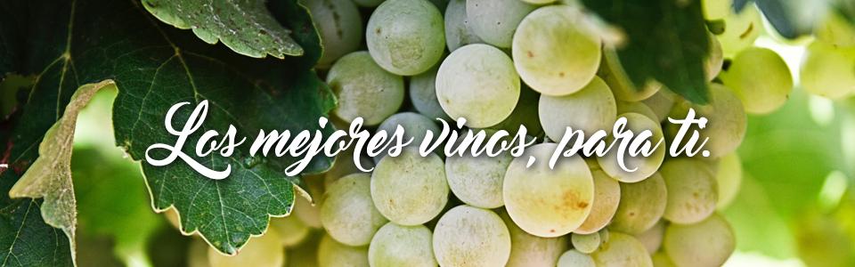 En Gadis te ayudamos a elegir el vino ideal para cada ocasión y menú.